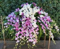 Gardenia and Orchid Garden Casket spray Funeral Flowers, Sympathy Flowers, Funeral Flower Arrangements from San Francisco Funeral Flowers.com Search for chinese funeral, sympathy funeral flower arrangements from our SanFranciscoFuneralFlowers.com website. Our funeral and sympathy arrangements include crosses, casket covers, hearts, wreaths on wood easels, coronas fúnebres, arreglos fúnebres, cruces para velorio, coronas para difunto, arreglos fúnebres, Florerias, Floreria, arreglos florales, corona funebre, coronas
