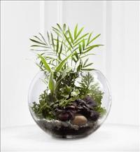 The FTD® Woodland Greens™ Terrarium Funeral Flowers, Sympathy Flowers, Funeral Flower Arrangements from San Francisco Funeral Flowers.com Search for chinese funeral, sympathy funeral flower arrangements from our SanFranciscoFuneralFlowers.com website. Our funeral and sympathy arrangements include crosses, casket covers, hearts, wreaths on wood easels, coronas fúnebres, arreglos fúnebres, cruces para velorio, coronas para difunto, arreglos fúnebres, Florerias, Floreria, arreglos florales, corona funebre, coronas