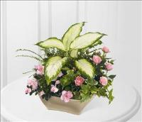 The FTD Garden of Grace™ Planter Funeral Flowers, Sympathy Flowers, Funeral Flower Arrangements from San Francisco Funeral Flowers.com Search for chinese funeral, sympathy funeral flower arrangements from our SanFranciscoFuneralFlowers.com website. Our funeral and sympathy arrangements include crosses, casket covers, hearts, wreaths on wood easels, coronas fúnebres, arreglos fúnebres, cruces para velorio, coronas para difunto, arreglos fúnebres, Florerias, Floreria, arreglos florales, corona funebre, coronas