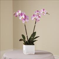 Pink Orchid Planter Funeral Flowers, Sympathy Flowers, Funeral Flower Arrangements from San Francisco Funeral Flowers.com Search for chinese funeral, sympathy funeral flower arrangements from our SanFranciscoFuneralFlowers.com website. Our funeral and sympathy arrangements include crosses, casket covers, hearts, wreaths on wood easels, coronas fúnebres, arreglos fúnebres, cruces para velorio, coronas para difunto, arreglos fúnebres, Florerias, Floreria, arreglos florales, corona funebre, coronas