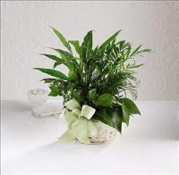 Woodland Greens™ Basket Funeral Flowers, Sympathy Flowers, Funeral Flower Arrangements from San Francisco Funeral Flowers.com Search for chinese funeral, sympathy funeral flower arrangements from our SanFranciscoFuneralFlowers.com website. Our funeral and sympathy arrangements include crosses, casket covers, hearts, wreaths on wood easels, coronas fúnebres, arreglos fúnebres, cruces para velorio, coronas para difunto, arreglos fúnebres, Florerias, Floreria, arreglos florales, corona funebre, coronas