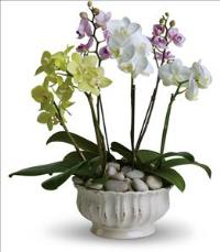 Regal Orchids Funeral Flowers, Sympathy Flowers, Funeral Flower Arrangements from San Francisco Funeral Flowers.com Search for chinese funeral, sympathy funeral flower arrangements from our SanFranciscoFuneralFlowers.com website. Our funeral and sympathy arrangements include crosses, casket covers, hearts, wreaths on wood easels, coronas fúnebres, arreglos fúnebres, cruces para velorio, coronas para difunto, arreglos fúnebres, Florerias, Floreria, arreglos florales, corona funebre, coronas