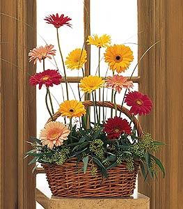 Gerberas in Wicker Basket Funeral Flowers, Sympathy Flowers, Funeral Flower Arrangements from San Francisco Funeral Flowers.com Search for chinese funeral, sympathy funeral flower arrangements from our SanFranciscoFuneralFlowers.com website. Our funeral and sympathy arrangements include crosses, casket covers, hearts, wreaths on wood easels, coronas fúnebres, arreglos fúnebres, cruces para velorio, coronas para difunto, arreglos fúnebres, Florerias, Floreria, arreglos florales, corona funebre, coronas
