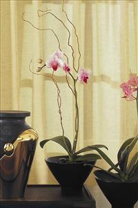 Small Orchid in Sm. Bowl Funeral Flowers, Sympathy Flowers, Funeral Flower Arrangements from San Francisco Funeral Flowers.com Search for chinese funeral, sympathy funeral flower arrangements from our SanFranciscoFuneralFlowers.com website. Our funeral and sympathy arrangements include crosses, casket covers, hearts, wreaths on wood easels, coronas fúnebres, arreglos fúnebres, cruces para velorio, coronas para difunto, arreglos fúnebres, Florerias, Floreria, arreglos florales, corona funebre, coronas