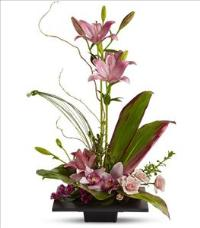 Imagination Blooms Funeral Flowers, Sympathy Flowers, Funeral Flower Arrangements from San Francisco Funeral Flowers.com Search for chinese funeral, sympathy funeral flower arrangements from our SanFranciscoFuneralFlowers.com website. Our funeral and sympathy arrangements include crosses, casket covers, hearts, wreaths on wood easels, coronas fúnebres, arreglos fúnebres, cruces para velorio, coronas para difunto, arreglos fúnebres, Florerias, Floreria, arreglos florales, corona funebre, coronas
