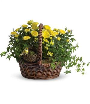 Yellow Trio Basket Funeral Flowers, Sympathy Flowers, Funeral Flower Arrangements from San Francisco Funeral Flowers.com Search for chinese funeral, sympathy funeral flower arrangements from our SanFranciscoFuneralFlowers.com website. Our funeral and sympathy arrangements include crosses, casket covers, hearts, wreaths on wood easels, coronas fúnebres, arreglos fúnebres, cruces para velorio, coronas para difunto, arreglos fúnebres, Florerias, Floreria, arreglos florales, corona funebre, coronas