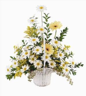 Daisies & Yellow Gerberas Funeral Flowers, Sympathy Flowers, Funeral Flower Arrangements from San Francisco Funeral Flowers.com Search for chinese funeral, sympathy funeral flower arrangements from our SanFranciscoFuneralFlowers.com website. Our funeral and sympathy arrangements include crosses, casket covers, hearts, wreaths on wood easels, coronas fúnebres, arreglos fúnebres, cruces para velorio, coronas para difunto, arreglos fúnebres, Florerias, Floreria, arreglos florales, corona funebre, coronas
