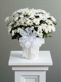Daisy Chrysanthemum (Lg) (CF016-11) Funeral Flowers, Sympathy Flowers, Funeral Flower Arrangements from San Francisco Funeral Flowers.com Search for chinese funeral, sympathy funeral flower arrangements from our SanFranciscoFuneralFlowers.com website. Our funeral and sympathy arrangements include crosses, casket covers, hearts, wreaths on wood easels, coronas fúnebres, arreglos fúnebres, cruces para velorio, coronas para difunto, arreglos fúnebres, Florerias, Floreria, arreglos florales, corona funebre, coronas